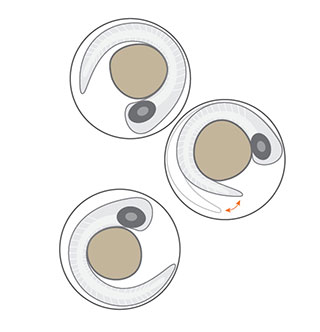 danioscope-activity-illustration